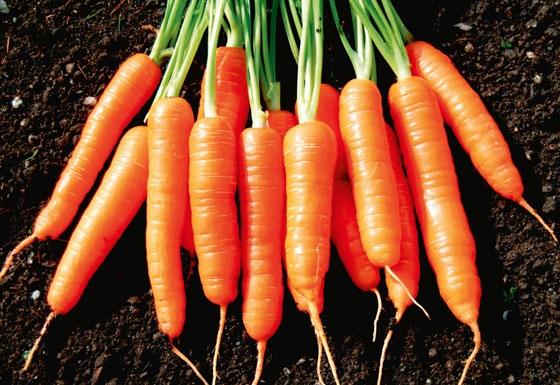 GW110 Carrot3
