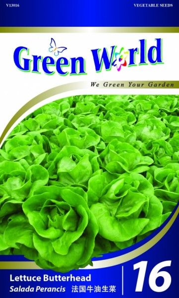 GW016 Lettuce Butterhead1