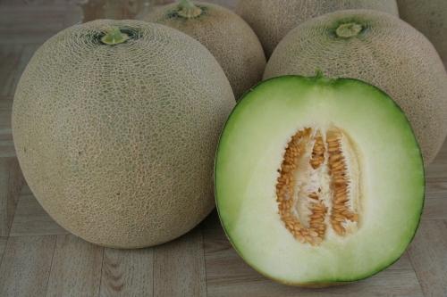 GW317 Melon - Sugar Mel2